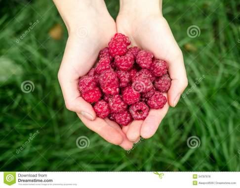 8 raspberry.jpg
